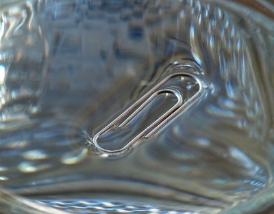 paper clip on surface of water